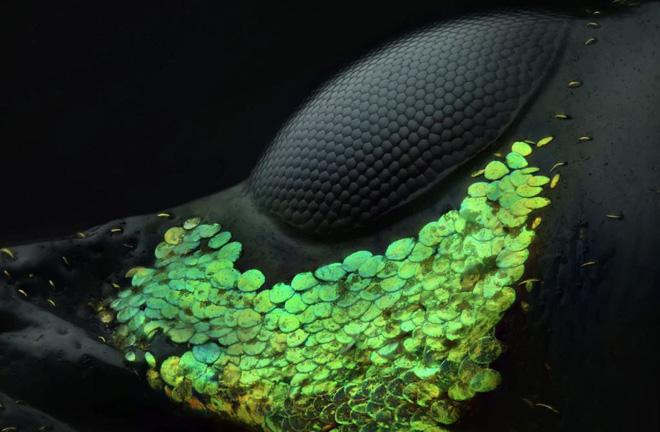 Khám phá Thế giới hiển vi qua những bức ảnh đạt giải thưởng cuộc thi do Nikon tổ chức - Ảnh 1.