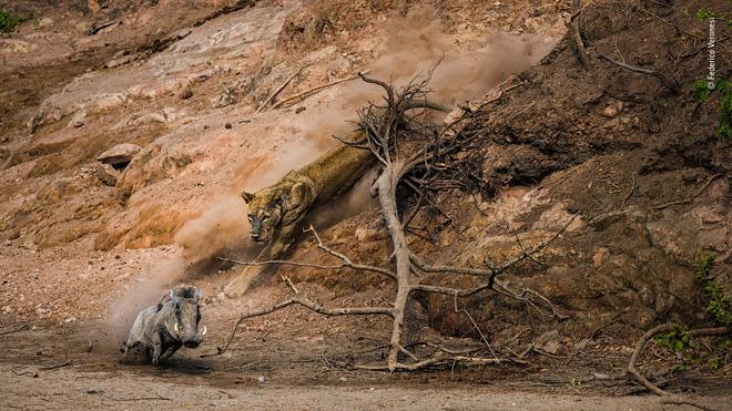 Cùng ngắm những tấm ảnh đẹp nhất trong cuộc thi The Wildlife Photographer of the Year 2018 - Ảnh 7.