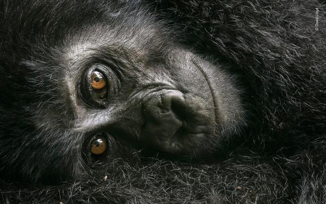 Cùng ngắm những tấm ảnh đẹp nhất trong cuộc thi The Wildlife Photographer of the Year 2018 - Ảnh 9.