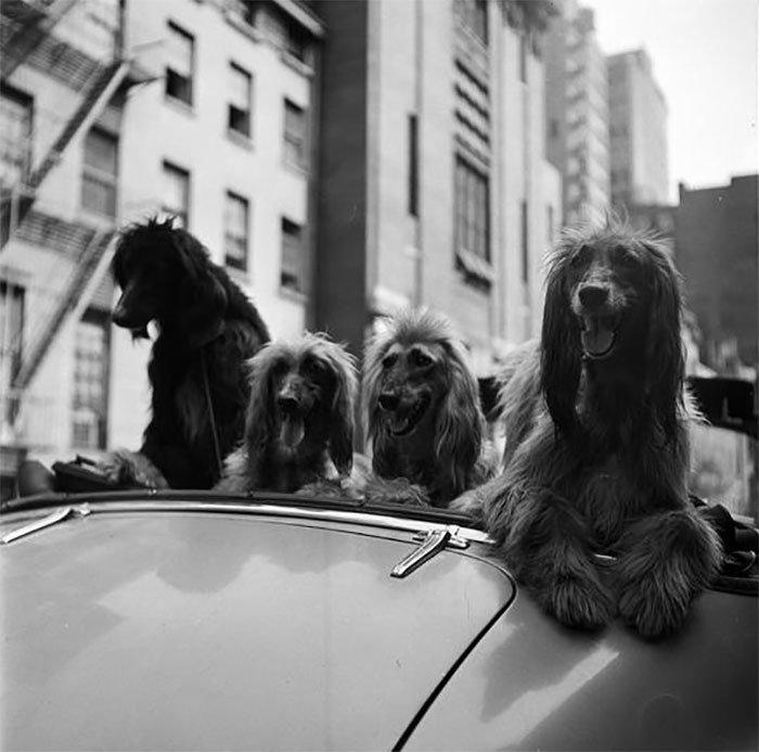 Đang tải 59ad111282a0b-vintage-photographs-new-york-street-life-stanley-kubrick-8-59a94581034c2__700.jpg…